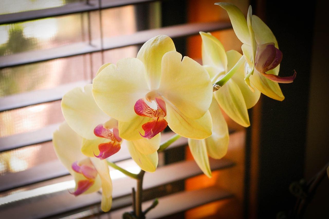 orchids-1540039_1280