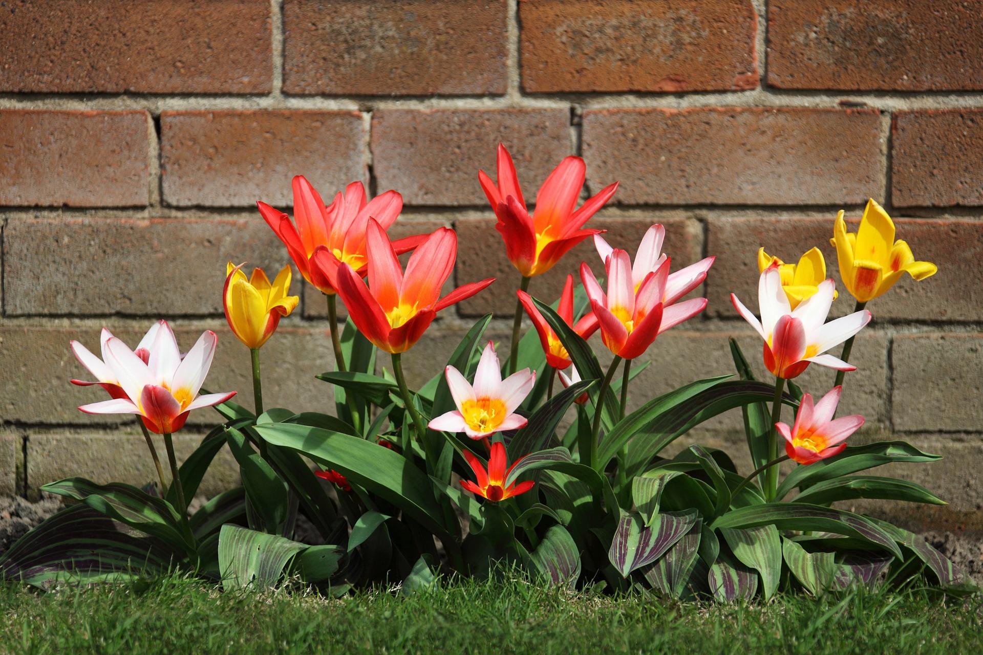 bloom-2518_1920