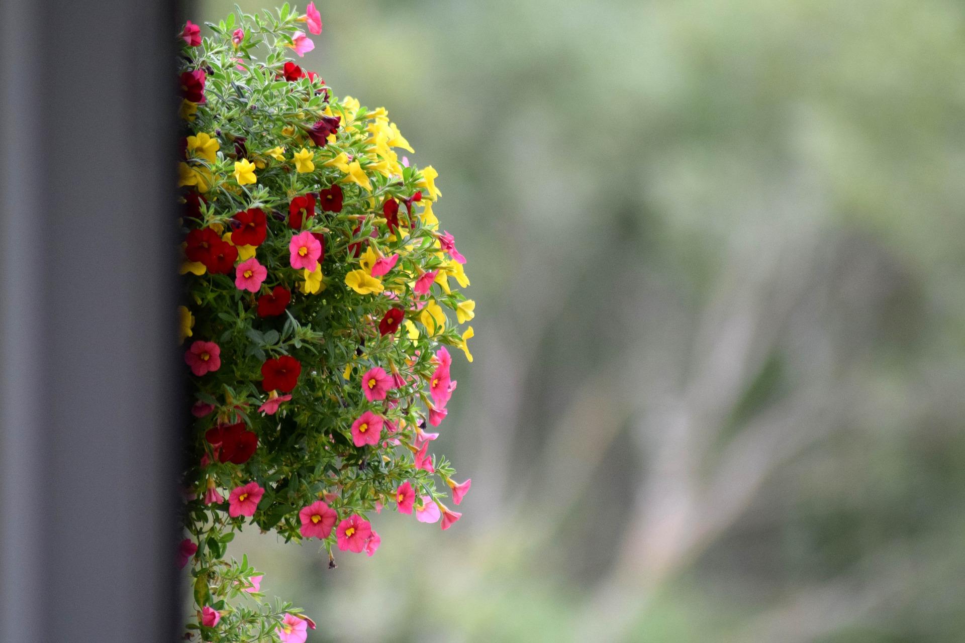 flowers-1580587_1920
