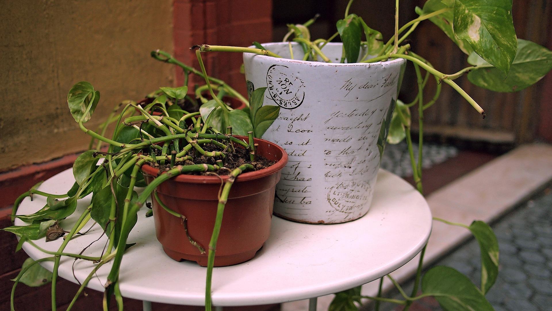 plants-1629206_1920