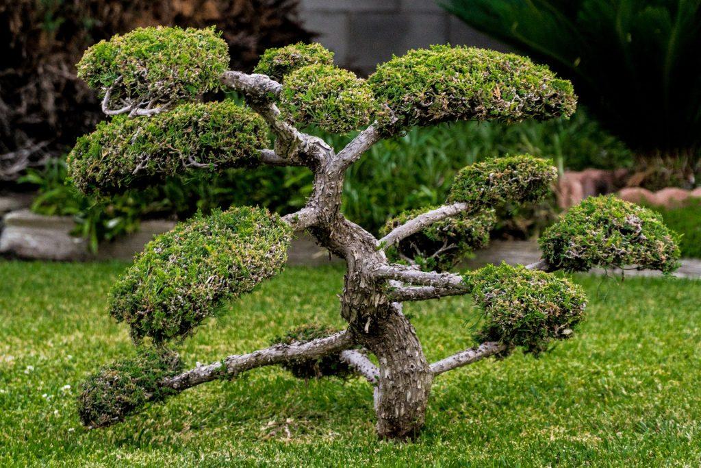 element Drvo - cveće i biljke