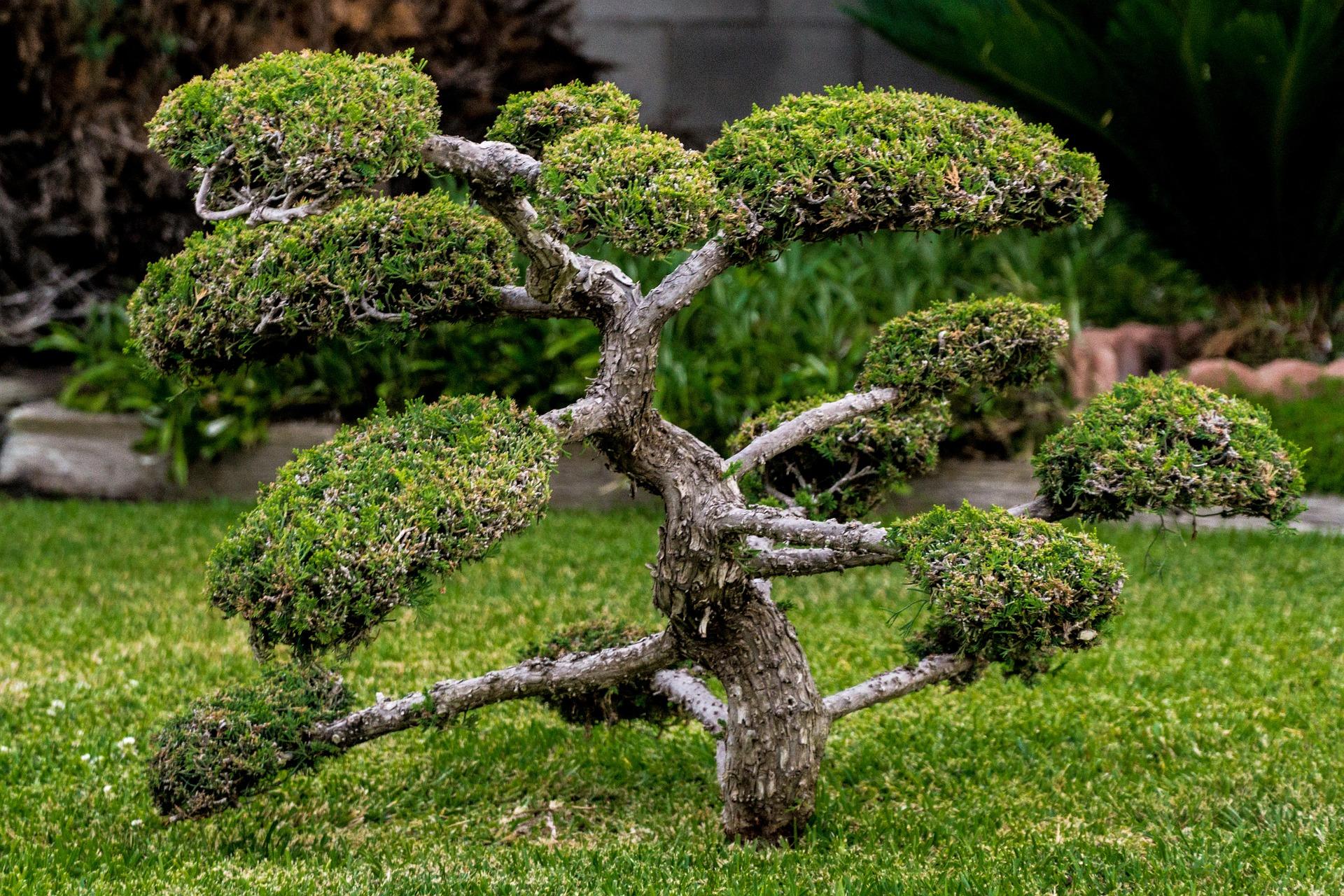 bonsai-1503108_1920
