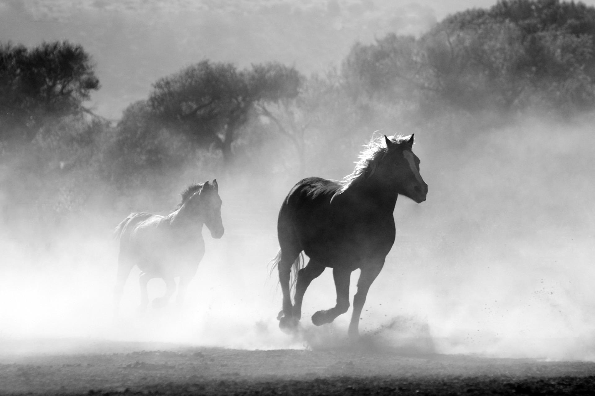 horse-430441_1920
