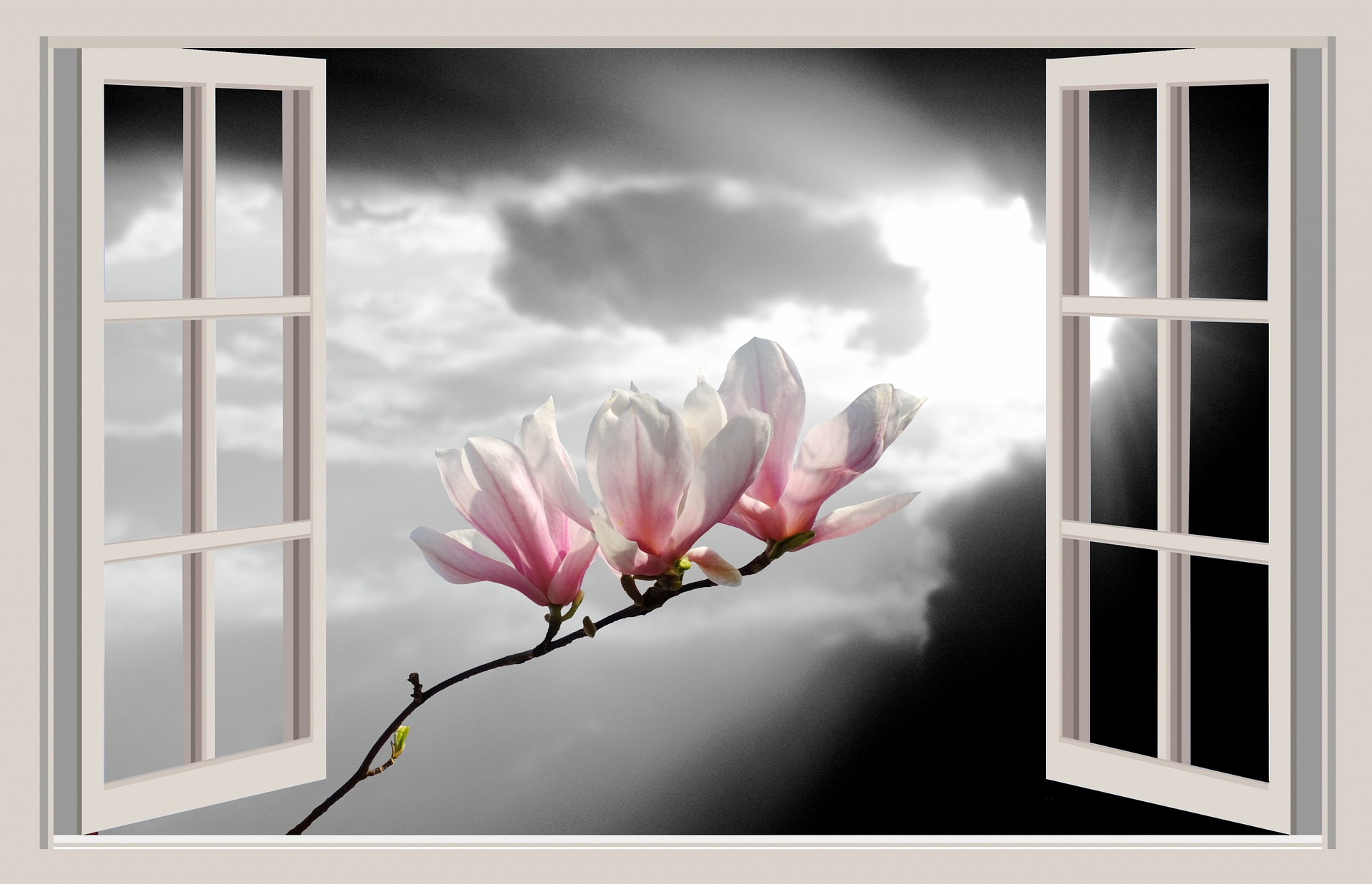 magnolia-1392460_1920