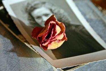 tužne i suvišne uspomene stare fotografije i osušena ruža