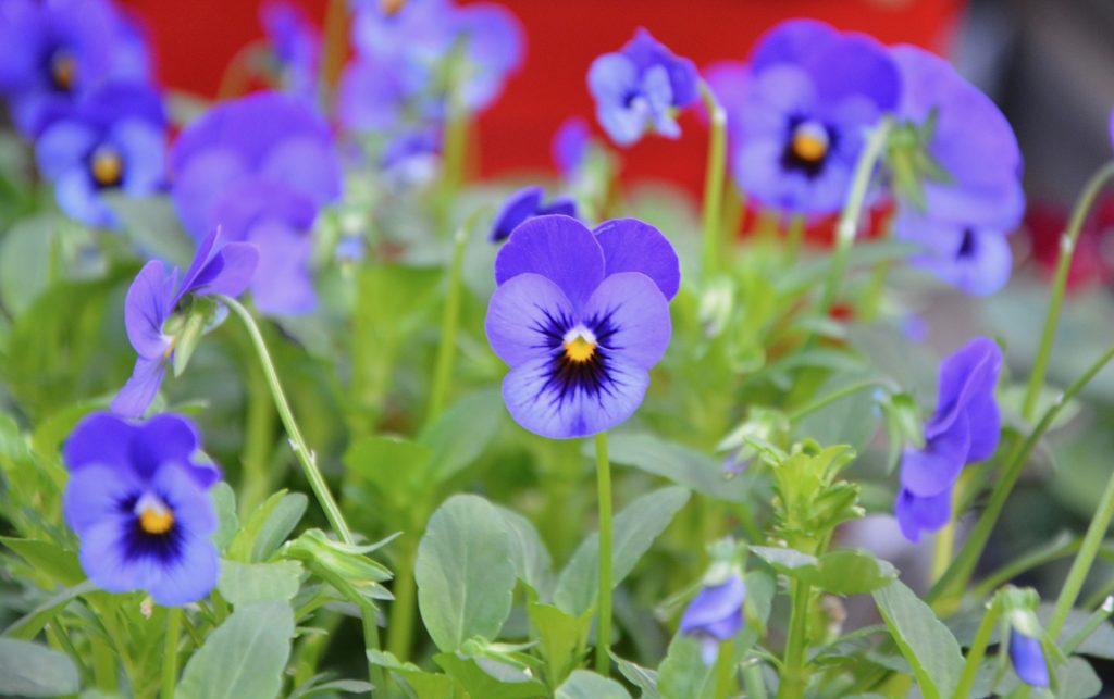 Feng shui Element Voda-priroda-plavi-cvet