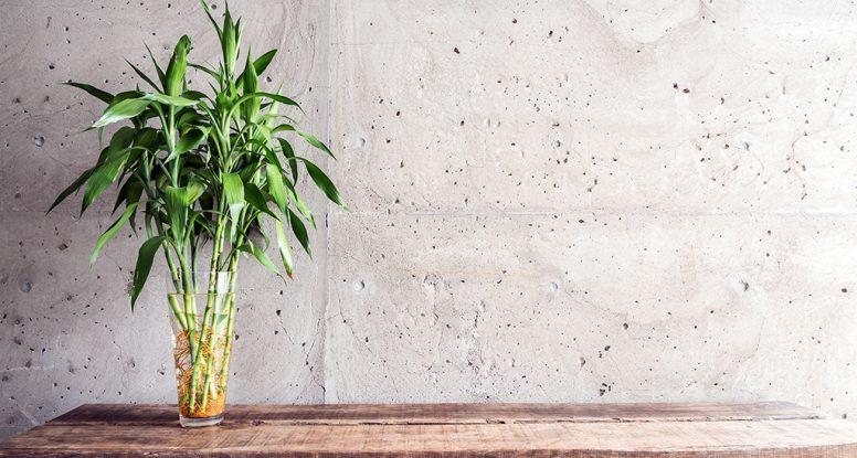 Srećni bambus u staklenoj vazi na drvenoj podlozi