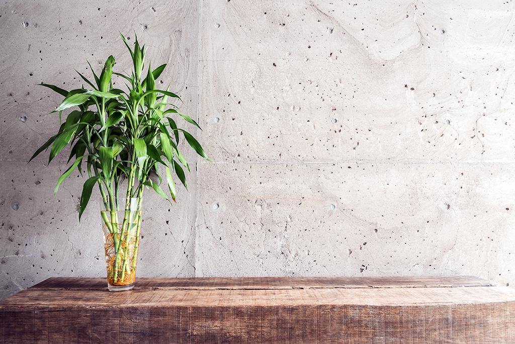 Srećni bambus u staklenoj vazi