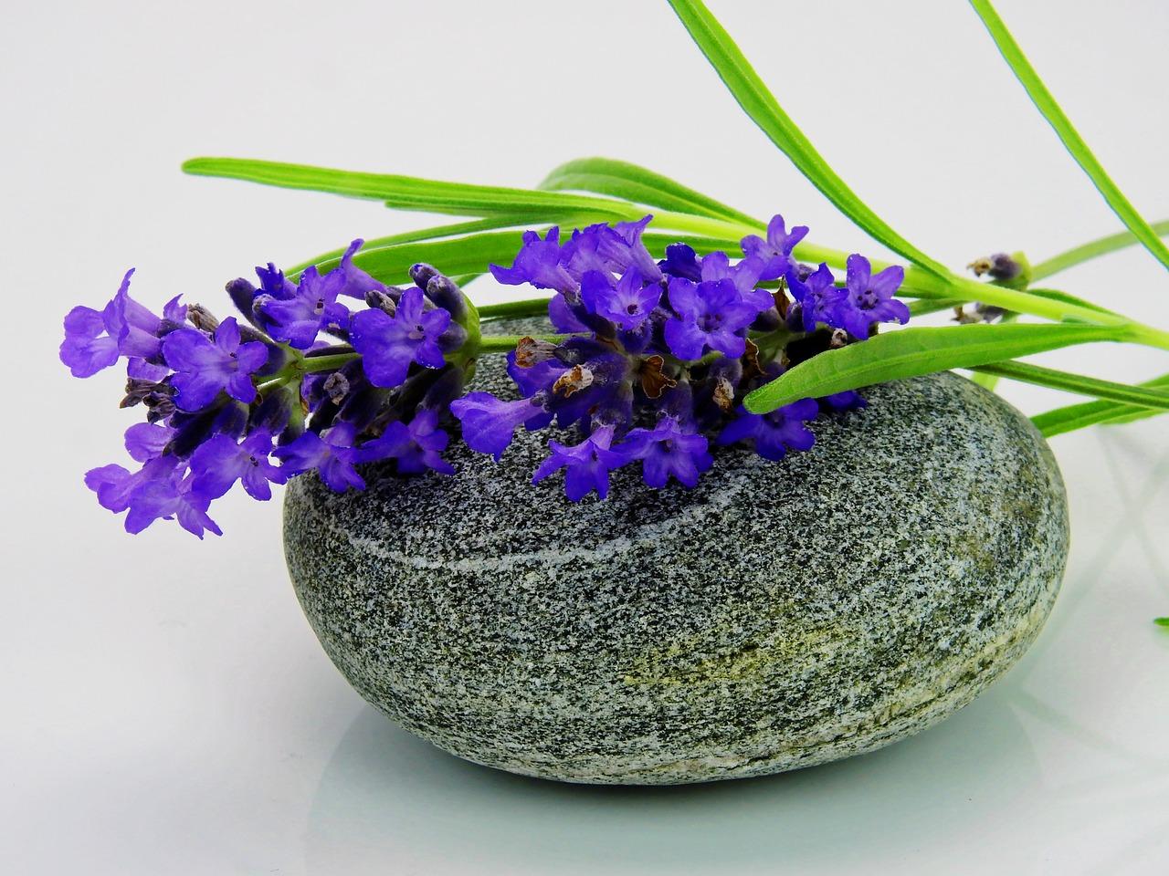 lavender-1280