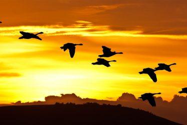 Lideri Fengshui jato ptica predvodi jedna ptica