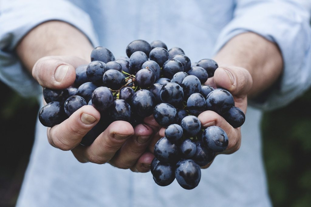Aven Vinarija brendiranje grožđe